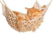 Cute red-haired kitten sleeping