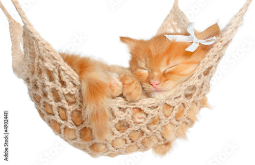 Cute red-haired kitten sleeping