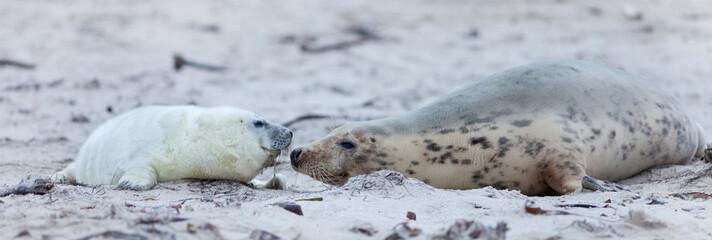 Robbenmutter mit Robbenbaby