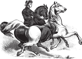 Man riding horses