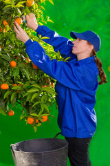 Tangerine orange farmer collecting woman