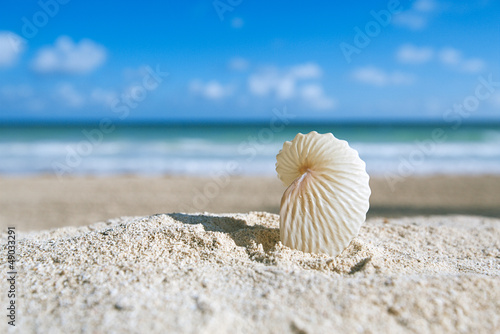 paper nautilus shell  with ocean , beach and seascape