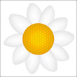 Beautiful Daisy icon vector illustration