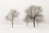 Fototapete Schnee - Nebel - Baum