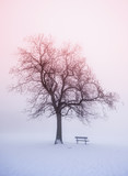 Winter tree in fog at sunrise