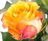 Fototapeta dzień matki - urodziny - Kwiat