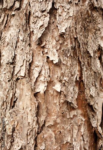 pine bark showing brown texture details