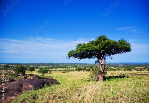 Savanna landscape in Africa, Serengeti, Tanzania