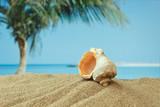 Fototapete Brightly - Caribbean - Muschel