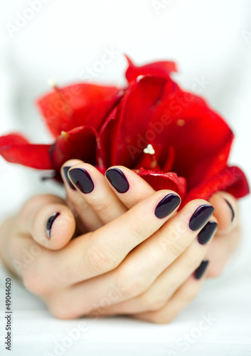 Cupped hands with manicure holding red flower on white