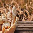Corbeille de pain, fond champ de blé