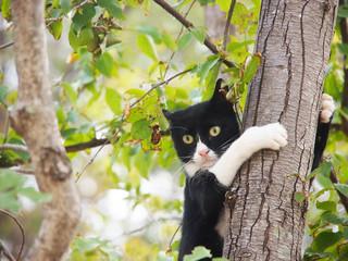junge Katze, schwarz-weiß, 10, hängt wie ein Äffchen am Baum