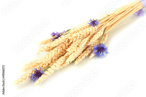 ears of wheat and cornflower isolated on white