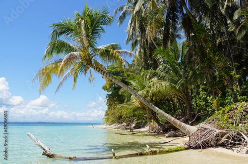 Coconut tree over the sea