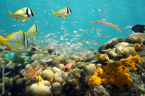 Shoal of fish in a shallow coral reef