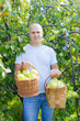 man gathers apples
