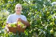 man gathers apples in  garden