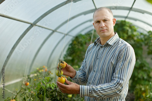 farmer looks tomatos plant