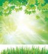 Vector of spring background with grass and leaves.