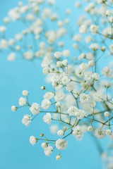 Gypsophila (Baby's-breath flowers) © Melica