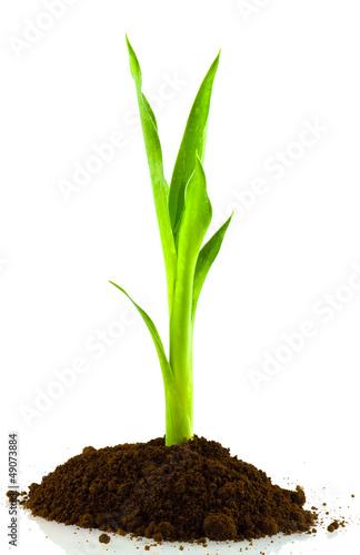Fototapeten,baum,busch,bambus,gras