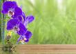 concept bien-être, nature, détente, massage zen