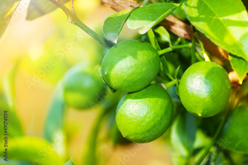 Close-up of green ripping lemon