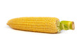 Fresh uncooked corn on the cob