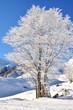 arbre recouvert de neige