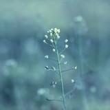 Fototapety Meadow Flower