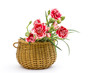 Carnations in a basket on white background