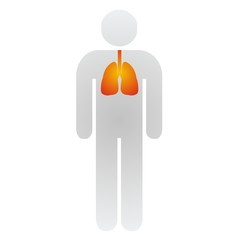 lungs - bronchi - asthma
