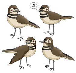 Cartoon Killdeer Set