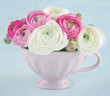 Ranunculus flowers in a pink cup