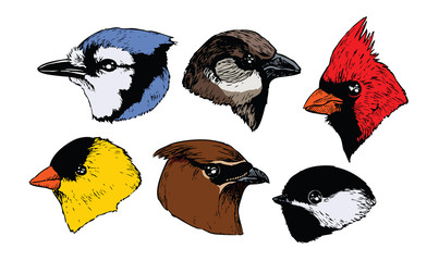 Six Bird Profiles