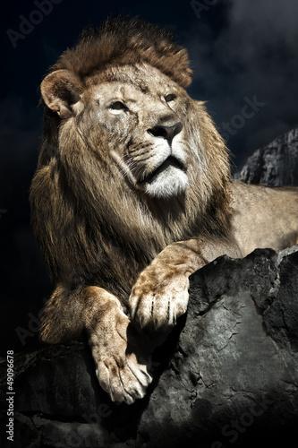 Fototapeten,afrika,afrikanisch,löwe,männlich