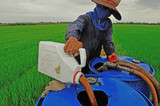 farmer mixing pesticide on the rice field poster