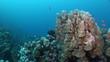Unterwasserwelt: Am Riff, El Quseir, Rotes Meer