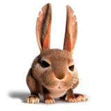Fototapety Little rabbit