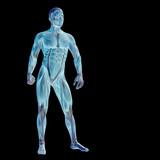 s vysokým rozlišením koncepční 3d člověka pro anatomii