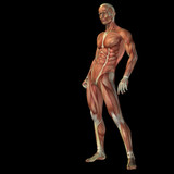 High resolution conceptual 3D human for anatomy