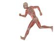 High resolution conceptual human for anatomy,medicine, health