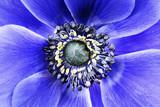 Fototapeta tło - paź - Kwiat