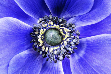 big flower blue