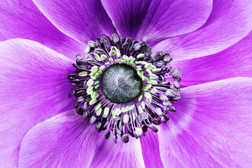 big purple flower