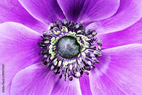 duzy-fioletowy-kwiat