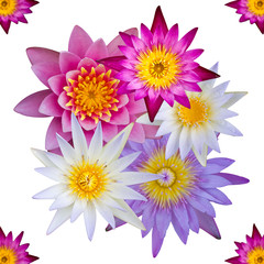 Isolated top view of colorful lotus flowers.