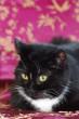 Katze ruht aufmerksam