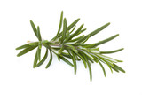 Fresh rosemary isolated on background white_II