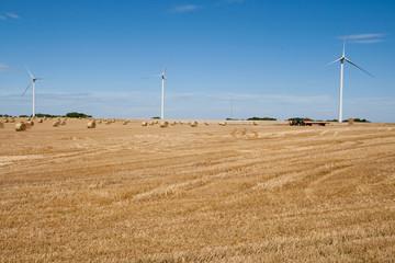 Campo di grano - Normandia